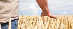 agriculture-biologique-weltec
